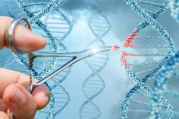 Liệu pháp di truyền có thể thay thế cho Viagra không?